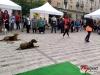 3. Szabolcs-Szatmár-Bereg Megyei Tacskó Találkozó Nyíregyházán