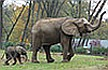 Elpusztult a Nyíregyházi Állatpark nőstény elefántja