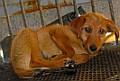 Altatásra váró kiskutyák a nyíregyházi Állategészségügyi telepen