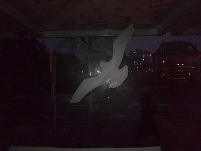 Üvegfelületnek repülő madarak Nyíregyházán