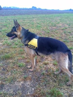 Tiszabecs - Helikopter, hőkamera és nyomkövető kutya segítségével<br /> fogtak el 13 határsértőt