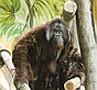 Megérkezett az orángután család a Nyíregyházi Állatparkba