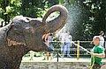 Nyári hőség a Nyíregyházi Állatparkban