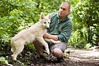 Gyermekáldás a kanadai fehér farkas családban