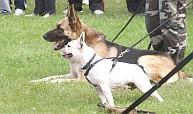 Fesztivál Az Állatokért 2010