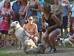 Állati családi napot rendezett a Kisherceg Állatmentő Egyesület