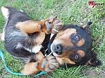 Országos CAC Kutyakiállítás a nyíregyházi Ilona tanyán