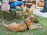 Tanévzáró kutyaparty Nyíregyházán