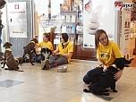 Örökbefogadó napot rendezett az Állatbarát Alapítvány a nyíregyházi Korzóban