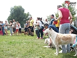 Fesztivál az állatokért 2014