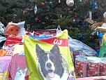 Állatok Karácsonya a nyíregyházi menhelyen