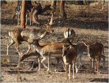 Még két hétig véleményezhető a vadgazdálkodási törvény koncepciója
