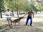 Bűnmegelőzési Állatbarát Délután az Érkertben