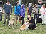 Fesztivál az állatokért az Állatbarát Alapítvány szervezésében