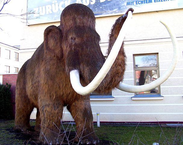 Mammut a Tiszában