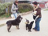 Húsvéti séta a nyíregyházi állatmenhelyen