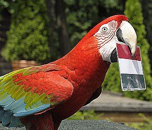 Foci EB eredményt jósol a Nyíregyházi Állatpark papagája