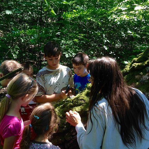 Nyári foglalkozások a nyíregyházi erdei iskolában