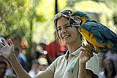 Papagáj show a Sóstó Zoo-ban