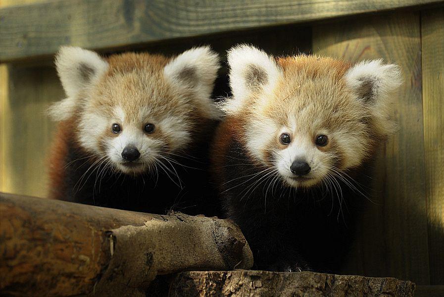 A 2016-os év értékelése, a Nyíregyházi Állatparkban