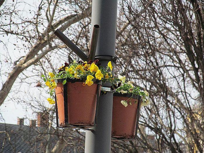 Virágok a Korzón