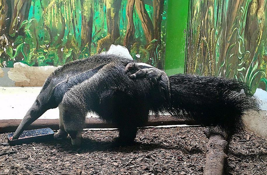 Újabb különleges, ritka állat született Nyíregyházán