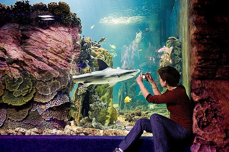 A Nyíregyházi Állatpark lett az Év Turisztikai Attrakciója