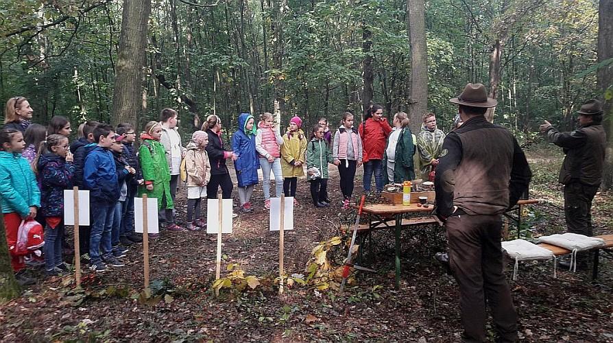 Rekordlétszám a nyíregyházi erdei iskolában