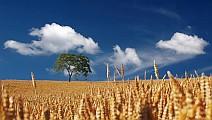 A mezőgazdaság jelentősége